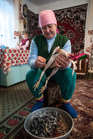 60 years old: Krasnodar, Russia - 18 March 2013: Woman 60 years old, removes feathers and down with the chicken in the Russian hut. In the background, a girl of 7 years. Peasant life of the Kuban region. Editorial