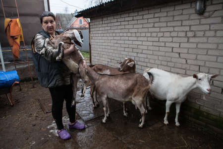 personally: Saint-Petersburg, Russia - December 14, 2014: Goat Saanen. The woman in the yard with a group of purebred goats personally grown it. The kid on the hands.