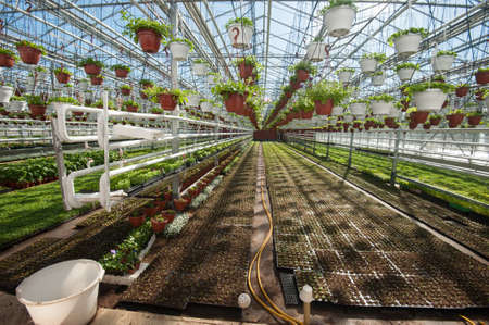 Multi-level greenhouse isolated from low external temperatures for growing fruit and vegetable crops. Saplings in pots and beds. Stock Photo