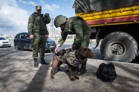 St. Petersburg, Russia - May 12, 2017: Sappers prepare service dogs for demonstration demonstrations on demining in the city park. Editorial