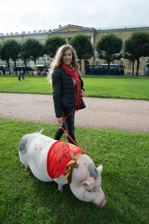 St. Petersburg, Rusland - 25 september 2016: Een vrouw loopt in het stadspark op het gras van een groot minivarken.