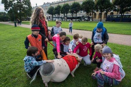 St. Petersburg, Rusland - 25 september 2016: Nieuwsgierige kinderen bekijken een groot minivarken dat in een park op het gazon loopt.
