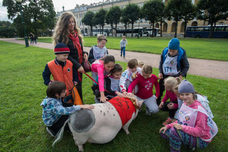 St. Petersburg, Russia - September 25, 2016: Curious children view a large mini pig walking in a park on the lawn.