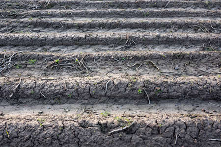 Furrows of plowed agricultural land, covered with a small dry crust before planting cereals