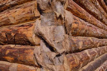New wooden blockhouse. Construction of a house or dwelling. Walls of round treated pine trunks. The angle of the structure. The method of laying logs.