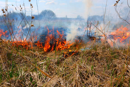 Burning dry grass on the field. There is a danger and a fire hazard for the nearby forest and buildings. Rapid flame spread.