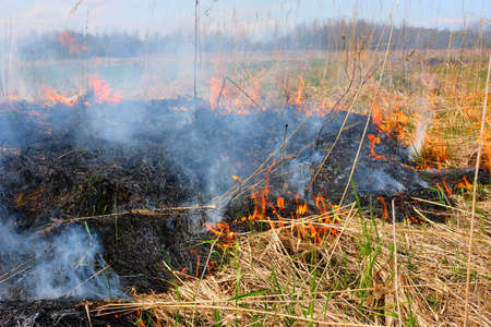 Burning dry grass on the field. There is a danger and a fire hazard for the nearby forest and buildings. Rapid flame spread. Фото со стока
