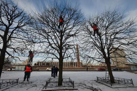 St. Petersburg, Russia - February 18, 2018: Winter care of trees in the city by employees of the municipal service. Seasonal, preventive pruning, care for park health