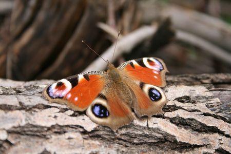 cortex: Butterfly on cortex tree