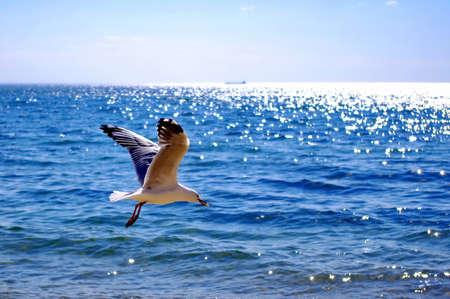 dieren: Vliegende sea gull met voedsel