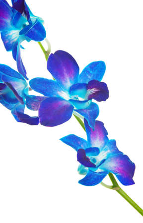 iris fiore: bellissimo iris fiore isolato su bianco