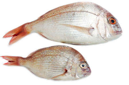 two fishes closeup over white background photo
