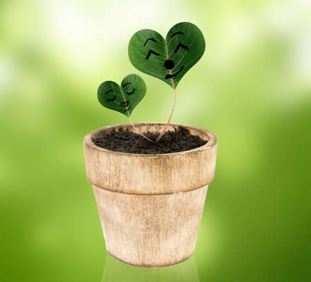 plant pot over white with heart shaped leaves photo