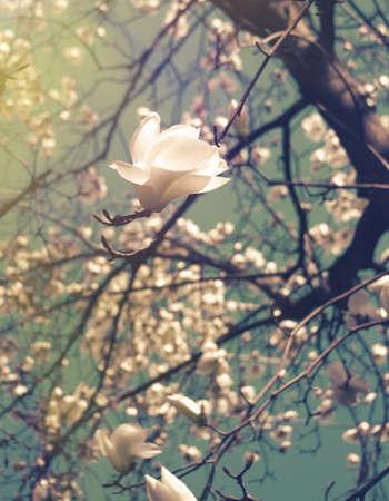 vintage look: blossom flower, retro vintage look
