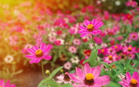 campo de flores: flores de primavera en la luz del sol
