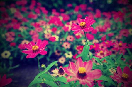 lomography: beautiful spring flowers, lomography effect