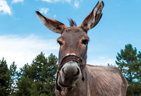 portrait of the donkey in nature Stock Photo