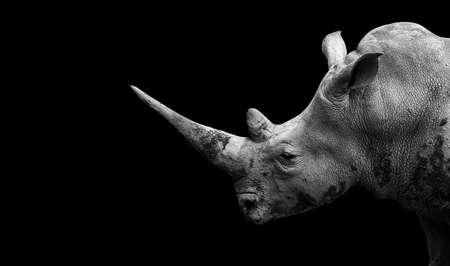 Rhino on the black background Фото со стока