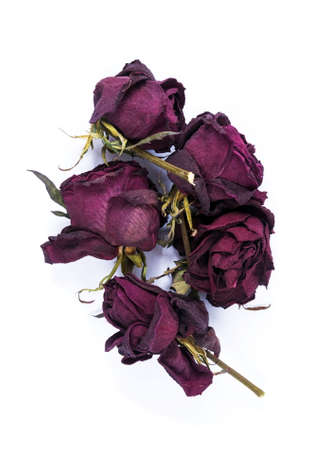 Old dry roses on the white background