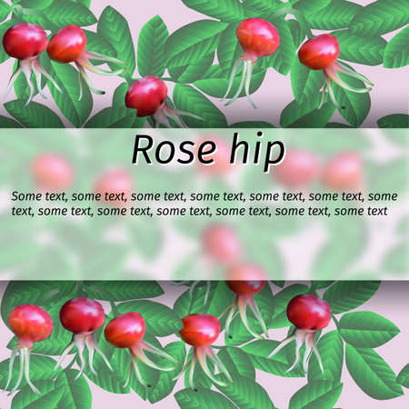 Vector rose hip with berries and branches banner Colorful Illustration