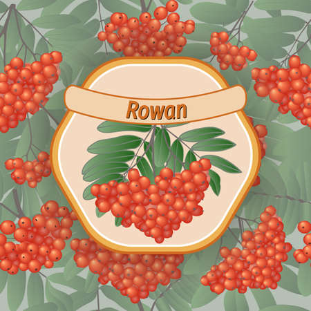rowan with berries and branches, vector label