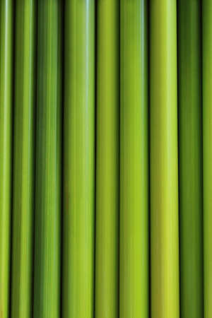 green leaf of sedge photo