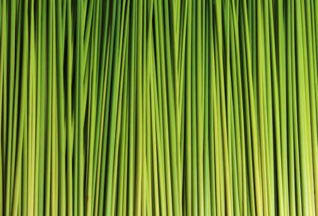 sedge for basketwork and background photo