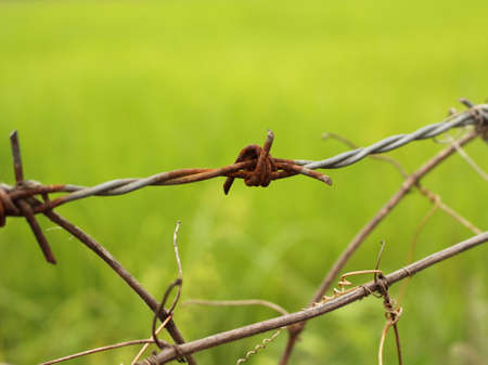 the field are security by barbed wire photo