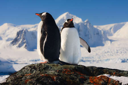 Two penguins dreaming sitting on a rock, mountains in the background Stock Photo - 6051450