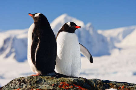 Two penguins dreaming sitting on a rock, mountains in the background photo