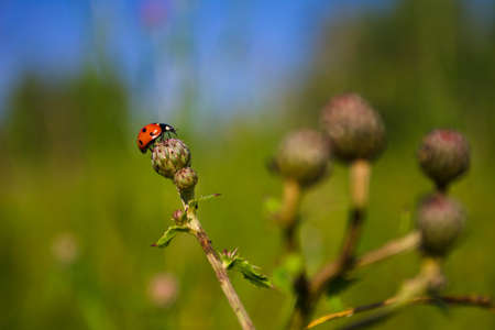 Little ladybug on flower under blue sky Stock Photo - 7759210