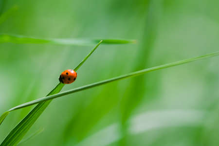 Little ladybug sitting on a green grass photo