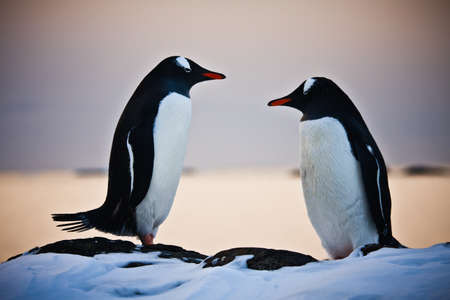Two penguins dreaming sitting on a rock Stock Photo