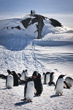 a large group of penguins having fun in the snowy hills of the Antarctic Stock Photo