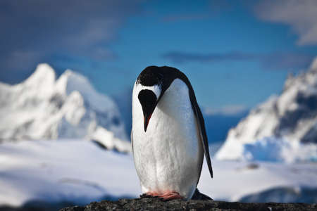 penguin standing on the rocks Stock Photo