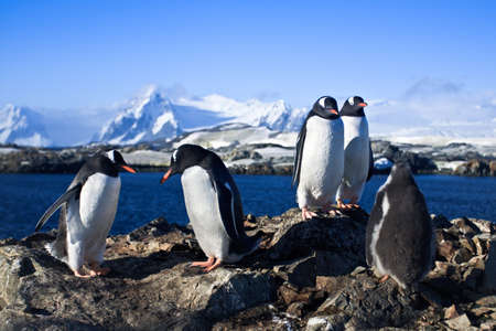 polar station: group of penguins on the rocks have a good time