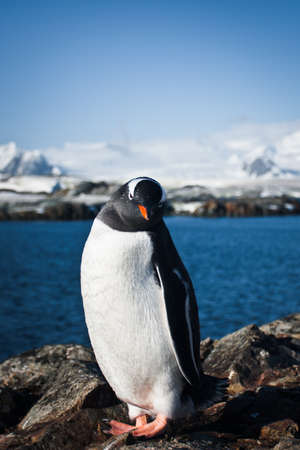 penguin is standing on the rocks in the Antarctic, the water in the background photo