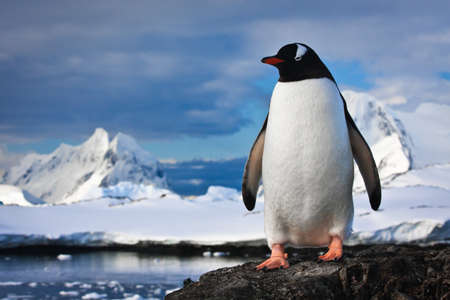 penguin have fun standing on the rocks Stock Photo