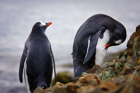 penguins standing on the rocks in the Antarctic, the water in the background photo