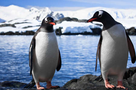 two penguins resting on the stony coast of Antarctica Stock Photo - 8312066