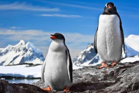 two penguins resting on the stony coast of Antarctica Stock Photo - 8312077