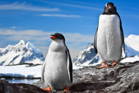 two penguins resting on the stony coast of Antarctica Stock Photo - 8312077