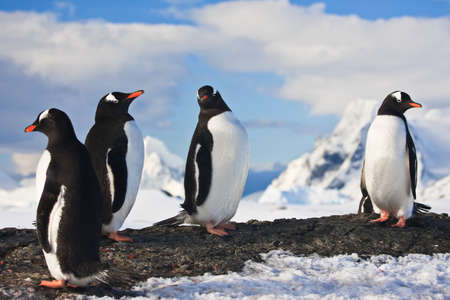 penguins dreaming sitting on a rock in Antarctica, mountains in the background Stock Photo