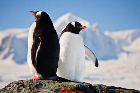 Two penguins dreaming sitting on a rock, mountains in the background Stock Photo