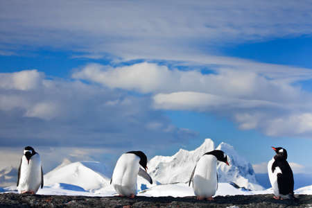 penguins dreaming sitting on a rock, mountains in the background photo