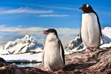 two penguins resting on the stony coast of Antarctica Stock Photo - 8765445