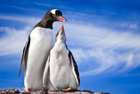 2 つのペンギンが南極大陸の石の海岸で休む