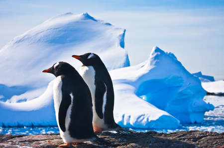 Two penguins dreaming sitting on a rock, glaciers in the background photo