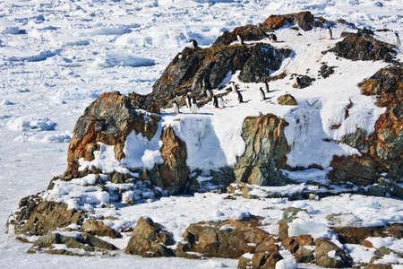 penguins resting on the stony coast of Antarctica photo