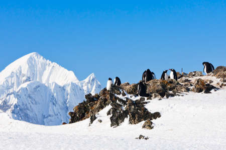 penguins standing on the rocks covered snow in Antarctica photo